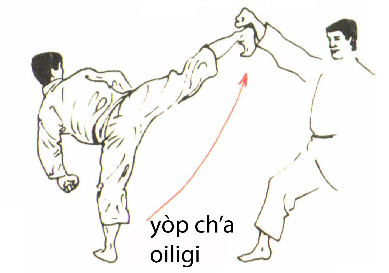 yop_cha_olligi